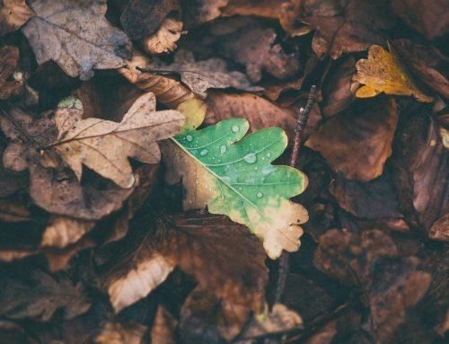 Aplicaciones para la nueva temporada de otoño