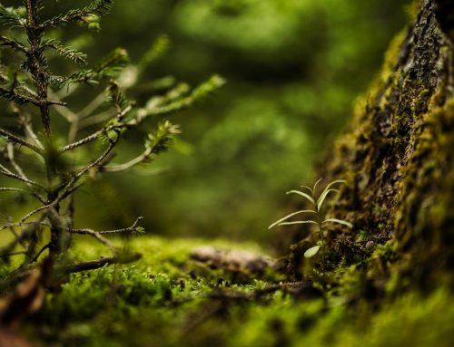 PlantNet: la wikipedia de la plantas
